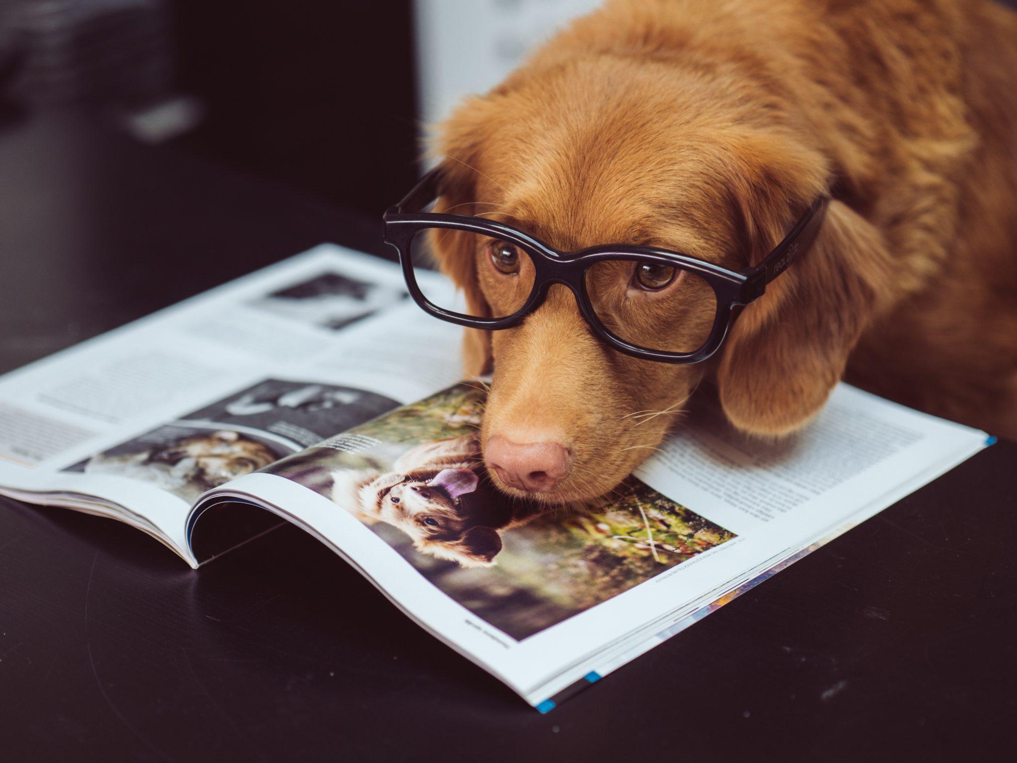cleverdog